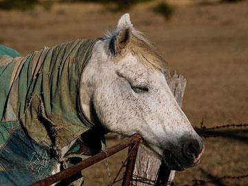 Το άλογο συνηθίζει να παίρνει υπνάκους όρθιο!
