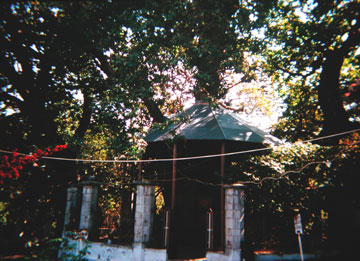 Ο πλάτανος στην Κλαπατσούνα της Αχαΐας.