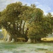Το δέντρο που γέρασε κάτω από την Αίτνα