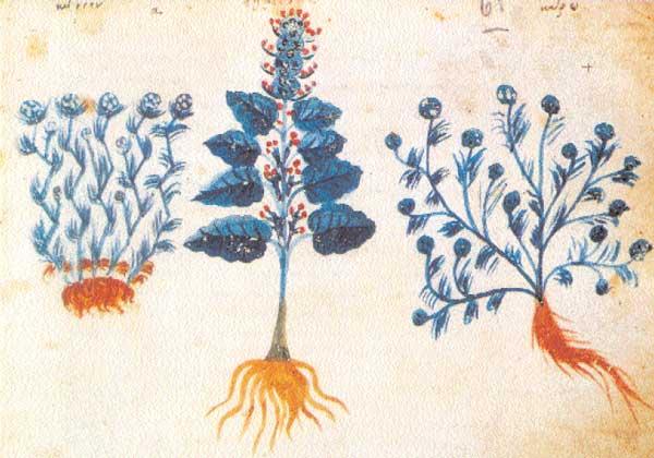 Κώνειον, κέστρον και κάρω, φυτά με θεραπευτικές ιδιότητες (Kώδ. Ω75, φ. 61α, «Περί Ύλης Iατρικής» Διοσκουρίδη, τέλη 11ου-αρχές 12 αι. Άγ. Όρος, Mονή Mεγίστης Λαύρας).