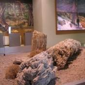 Συνεχίζεται το πρόγραμμα συντήρησης και αποκατάστασης απολιθωμένων δέντρων