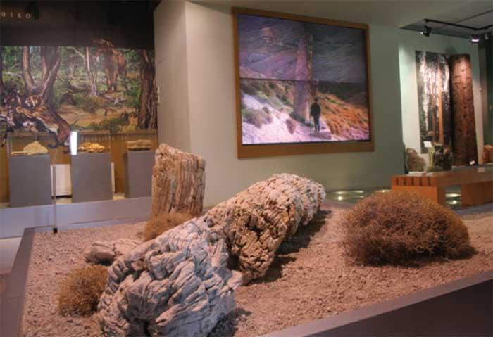 Μουσείο Φυσικής Ιστορίας Απολιθωμένου Δάσους Λέσβου. Η Αίθουσα του Απολιθωμένου Δάσους.