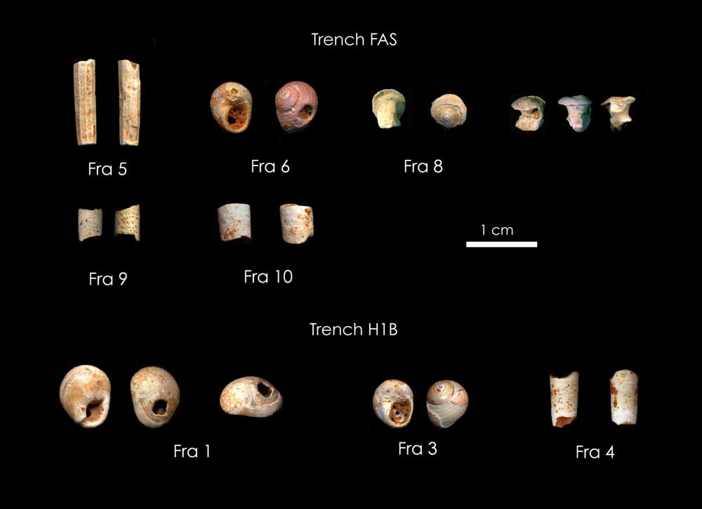 2. Τα χρονολογημένα οστέινα κοσμήματα. (Copyright K. Douka & C. Perles)