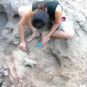Το καλοκαίρι του 2012 νέα ανασκαφή στη θέση «Ντικιλί Τας»