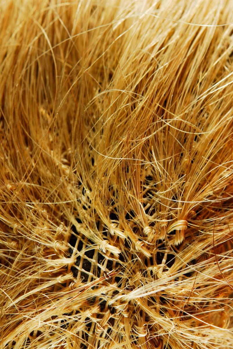 Εικ. 4. Π.Λ.Ι.,  αρ. ευρ. 2005.18.0004, «Τοto», λεπτομέρεια από τα μαλλιά.