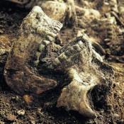 Σε Βίκινγκς αποδίδονται τα σκελετικά κατάλοιπα της Οξφόρδης