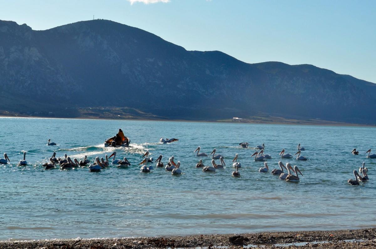 Εικ. 7. Υδρόβια πουλιά και ψάρεμα στη λίμνη.