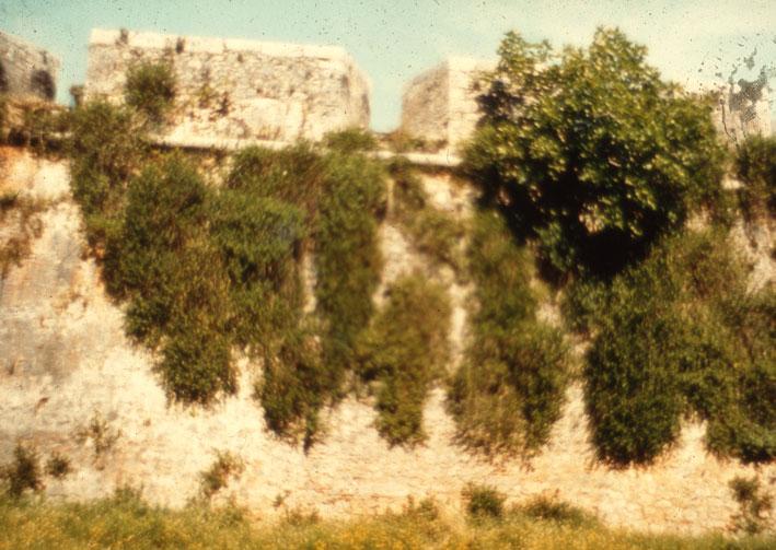 Εικ. 21α. Χαρακτηριστικές εικόνες αυτοφυούς βλάστησης σε εξωτερικές πλευρές των προμαχώνων της ακρόπολης του φρουρίου.