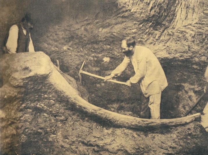 Παλαιοντολογικά ευρήματα στη διάρκεια ανασκαφών στη λεκάνη της Μεγαλόπολης.