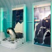 50.000 άτομα στην «Παγωμένη Ανταρκτική»