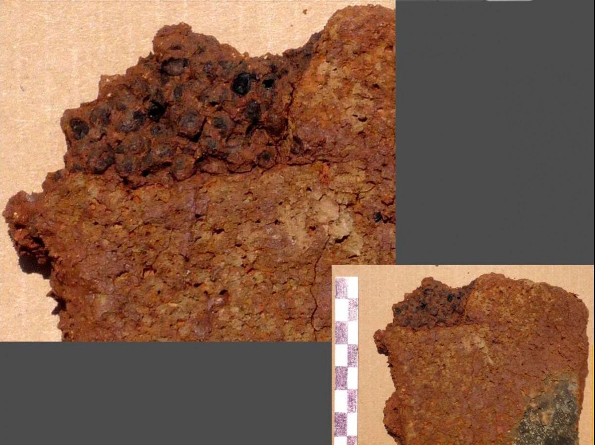 Εικ. 9. Απανθρακωμένα κουκούτσια σταφυλιών κολλημένα στην εσωτερική πλευρά οστράκου πίθου.