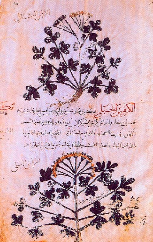 Εικ. 4. Το φυτό Thistle σε αραβικό κώδικα. 9ος αι.