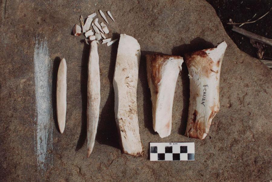 Εικ. 1. Αντικείμενα από μηρό και κνήμη βοοειδούς που αντιπροσωπεύουν τα διάφορα στάδια κατασκευής οστέινης περόνης, αρχικά με απόκρουση (απόσπαση μικρών σχιδών) και στη συνέχεια με τριβή πάνω σε μεγάλο λίθινο τριβείο (Πειραματική Αρχαιολογία).