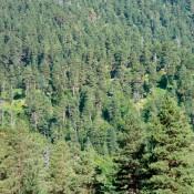 Αναζητώντας το ξύλο από το οποίο κατασκευάζονταν οι αρχαίες τριήρεις
