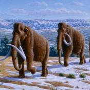 Η κλιματική αλλαγή εξαφάνισε τα μαμούθ από την Ευρώπη;