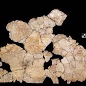 Μια άγνωστη τοιχογραφία από το ανάκτορο του Νέστορα