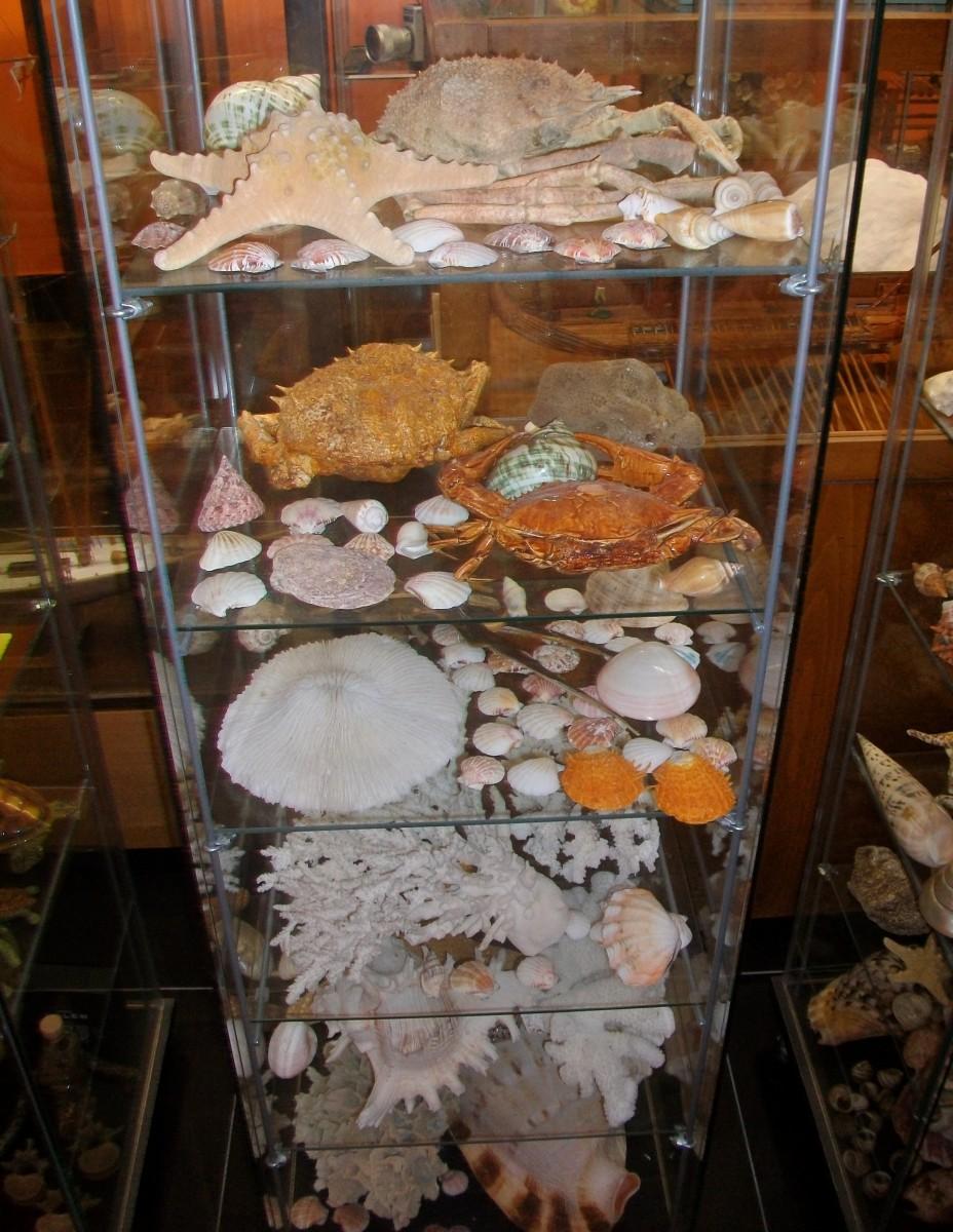 Συλλογή ειδών θαλάσσιας ζωής, Μουσείο Τεχνών και Επιστημών Ηπείρου