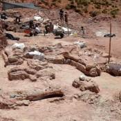 Στην Παταγονία εντοπίστηκαν τα υπολείμματα του μεγαλύτερου δεινόσαυρου που έχει ανακαλυφθεί μέχρι τώρα