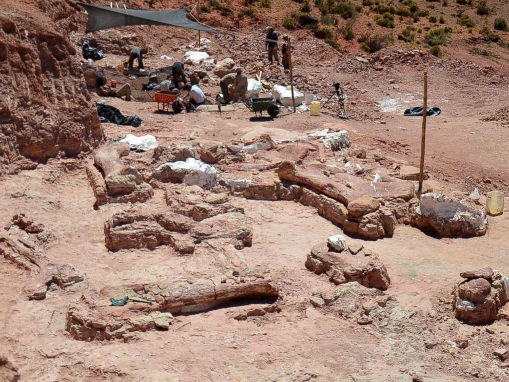 Tα απολιθωμένα λείψανα του τεράστιου δεινόσαυρου (φωτ. Museo Paleontológico Egidio Feruglio).