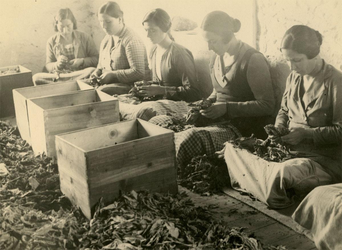 Ξεφυλλίστρες, δεκαετία 1930. © Σουηδικό Μουσείο Σπίρτων και Καπνού.