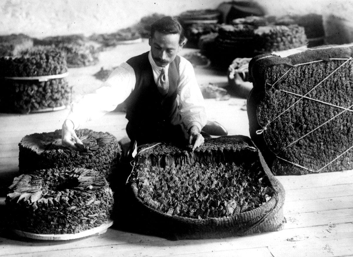 Ντεκτζής (εργάτης επεξεργασίας καπνού). Καβάλα. © Σουηδικό Μουσείο Σπίρτων και Καπνού.