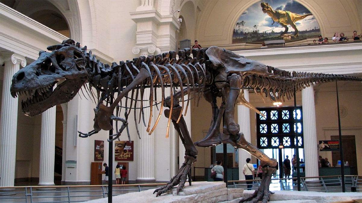 Σκελετός τυραννόσαυρου στο Field Museum, στο Σικάγο.
