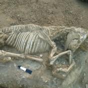 Ταφή αλόγου αποκαλύφθηκε στη Χίο