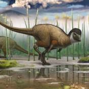 Όλοι (ή σχεδόν όλοι) οι δεινόσαυροι είχαν κάποτε φτερά