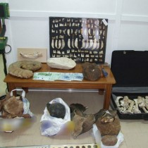Πέλλα: Σύλληψη για κατοχή αρχαίων αντικειμένων