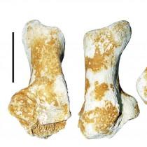 Απολίθωμα γιγαντιαίας αρκούδας 3 εκατ. ετών βρέθηκε στα Γρεβενά