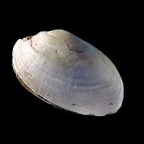 Το αρχαιότερο έργο «αφηρημένης τέχνης» βρέθηκε πάνω σε ένα όστρακο