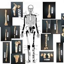 Τα οστά της Αμφίπολης ανήκουν όλα σε 5 άτομα