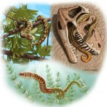 Ξαναγράφεται η ιστορία της εξέλιξης των φιδιών