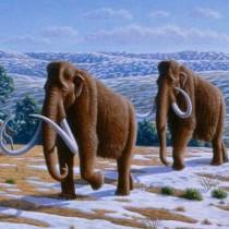 Ένα βήμα πιο κοντά στη «νεκρανάσταση» του μαμούθ