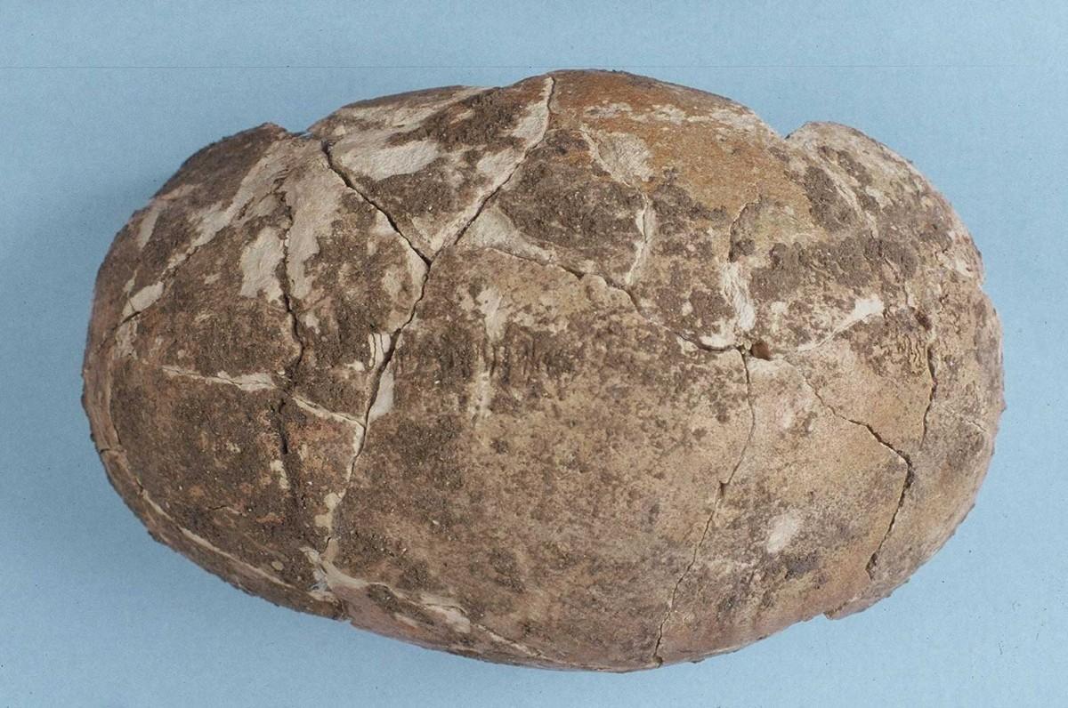Εικ. 35. Το κρανίο της Ανώτερης Παλαιολιθικής χρονολογημένο στο 14500 π.Χ. περίπου.