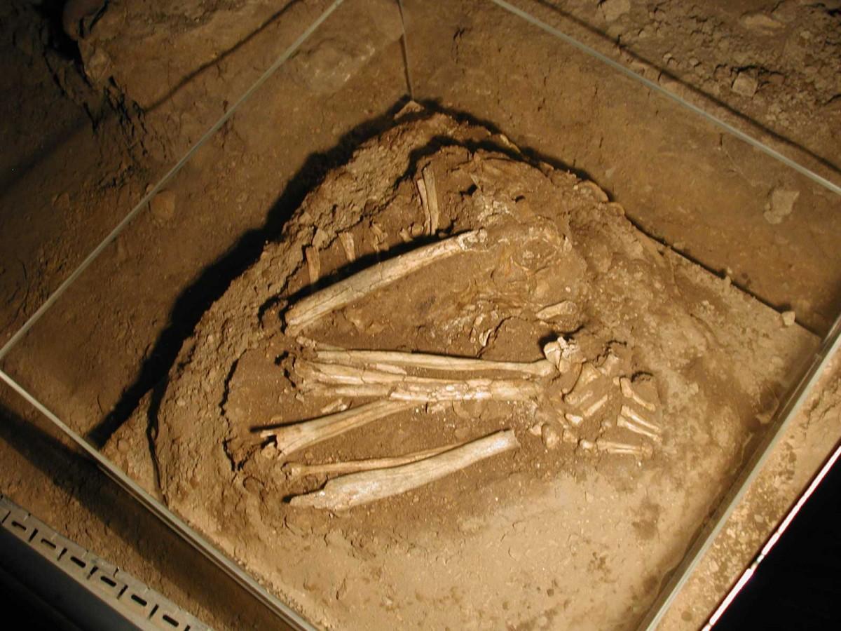Εικ. 39. Μεσολιθική ταφή (σκάμμα Ι5/Ι6) που διατηρήθηκε στη θέση εύρεσής της μέσα στο σπήλαιο.