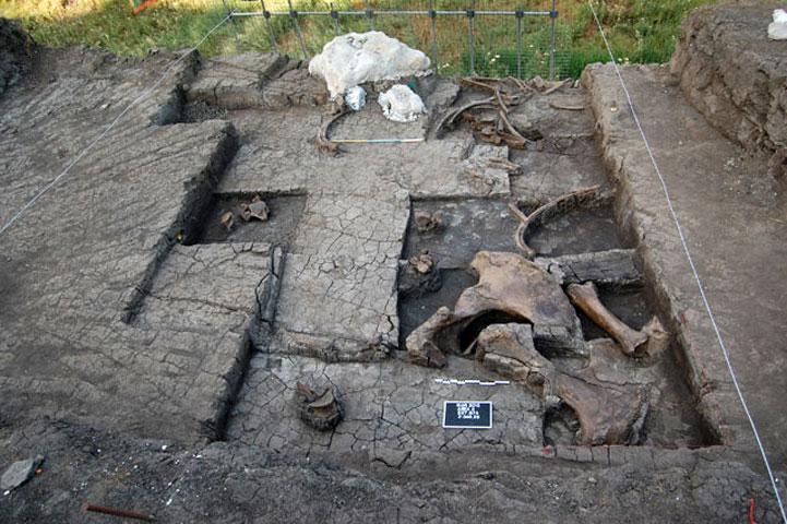 Μαραθούσα 1: Μερική άποψη του χώρου της ανασκαφής με τμήμα του σκελετού του ελέφαντα (φωτ. ΥΠΟΠΑΙΘ).