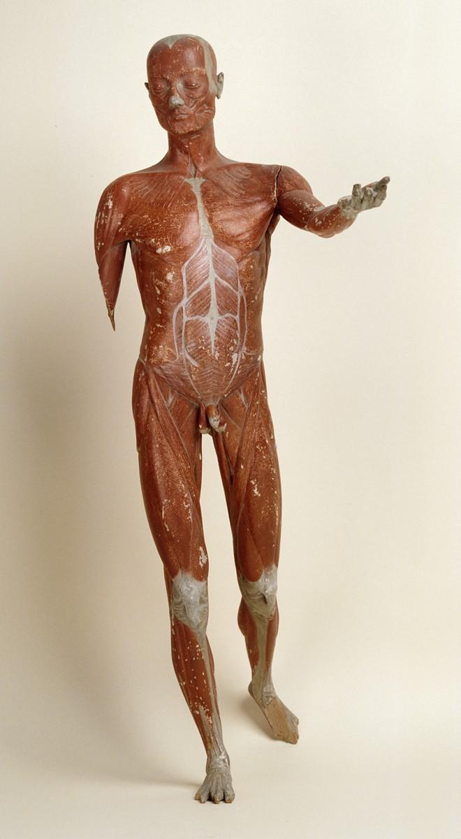 Προπλάσματα, Μουσείο Ιστορίας του Πανεπιστημίου Αθηνών