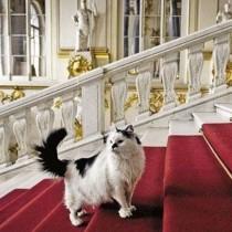 Οι γάτες-φρουροί του Ερμιτάζ