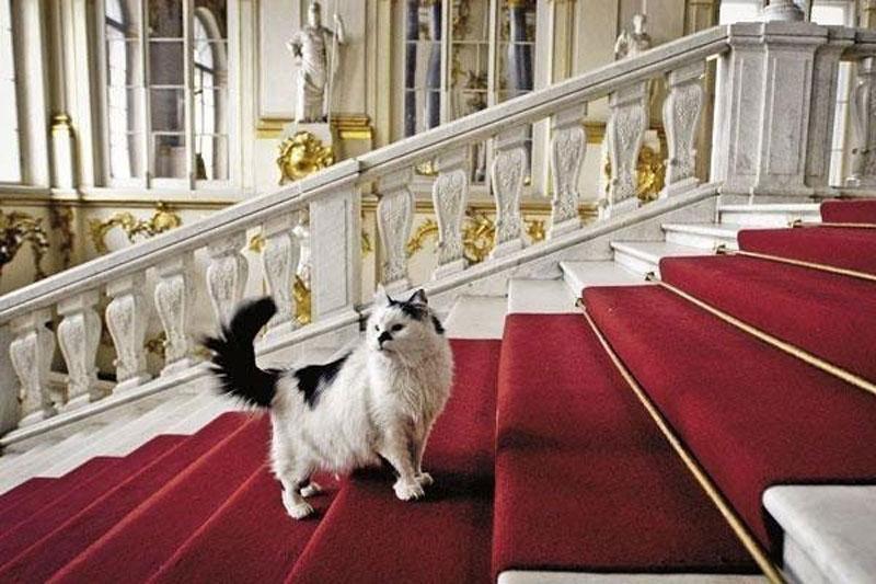 Η ιστορία με τις γάτες του Ερμιτάζ χρονολογείται από το 1745, όταν η αυτοκράτειρα Ελισάβετ, κόρη του Μεγάλου Πέτρου, υπέγραψε διάταγμα με το οποίο έδινε εντολή «να βρεθούν στο Καζάν οι καλύτερες γάτες, οι πιο μεγάλες, ικανές να πιάνουν ποντίκια, προκειμένου να σταλούν στην αυλή της Αυτής Εξοχότητας».