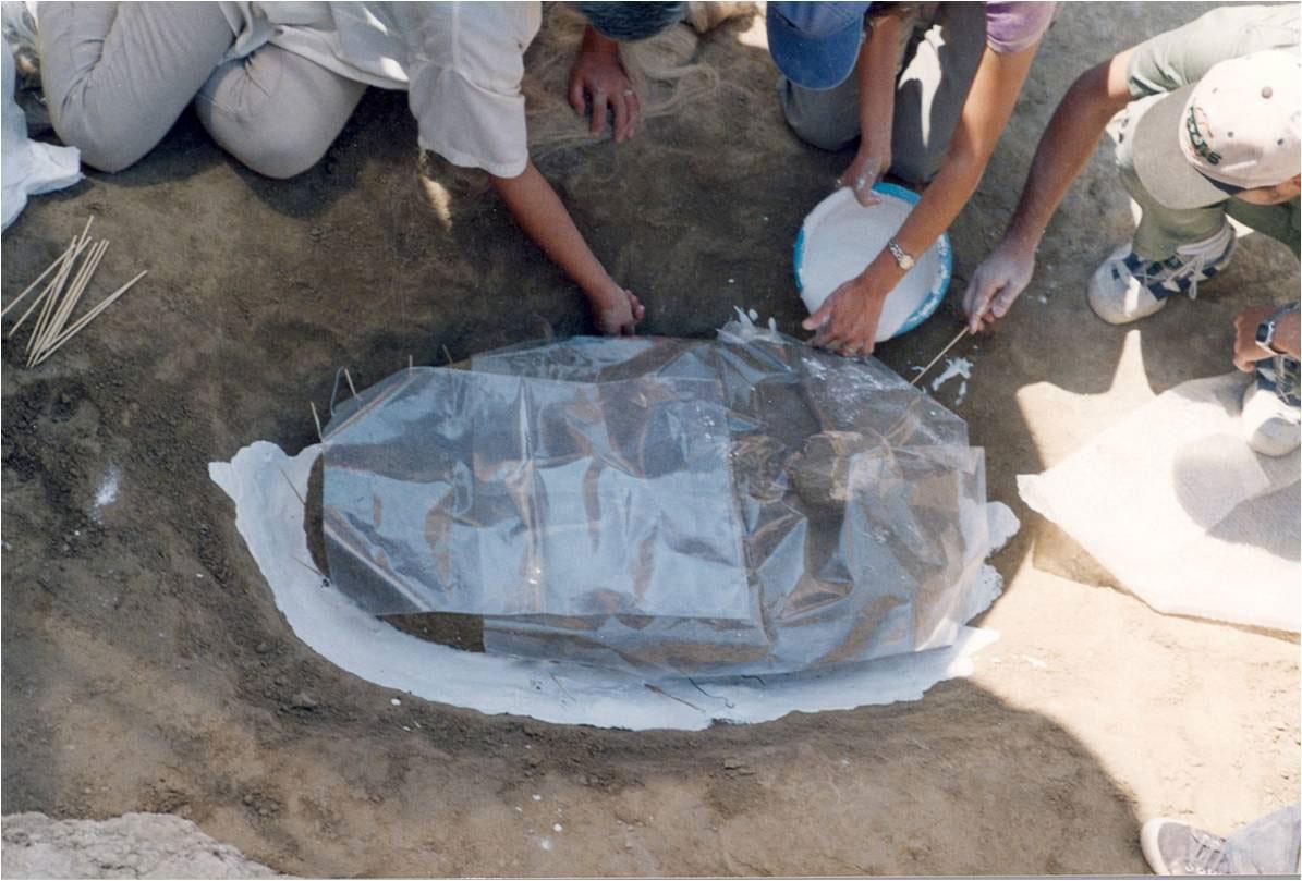 Εικ. 7. Σκελετός μικρού παιδιού, εύρημα στην ανασκαφή της Άνω Κώμης Κοζάνης (1999). Προετοιμασία γύψινου νάρθηκα για την ασφαλή απομάκρυνσή του από το έδαφος.