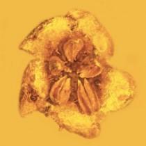 Δηλητηριώδη λουλούδια στρυχνίνης ηλικίας 15 εκατ. ετών