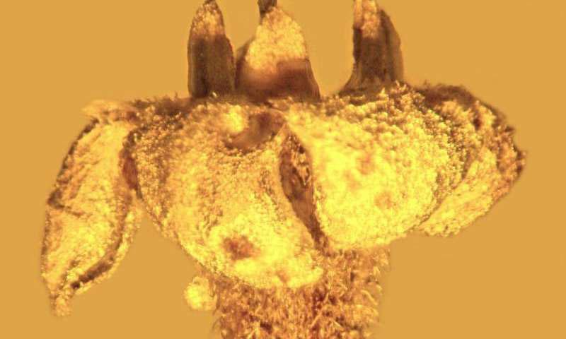 To άγνωστο και εξαφανισμένο σήμερα πια φυτό oνομάστηκε «Strychnos electri» (φωτ. ΑΠΕ-ΜΠΕ).