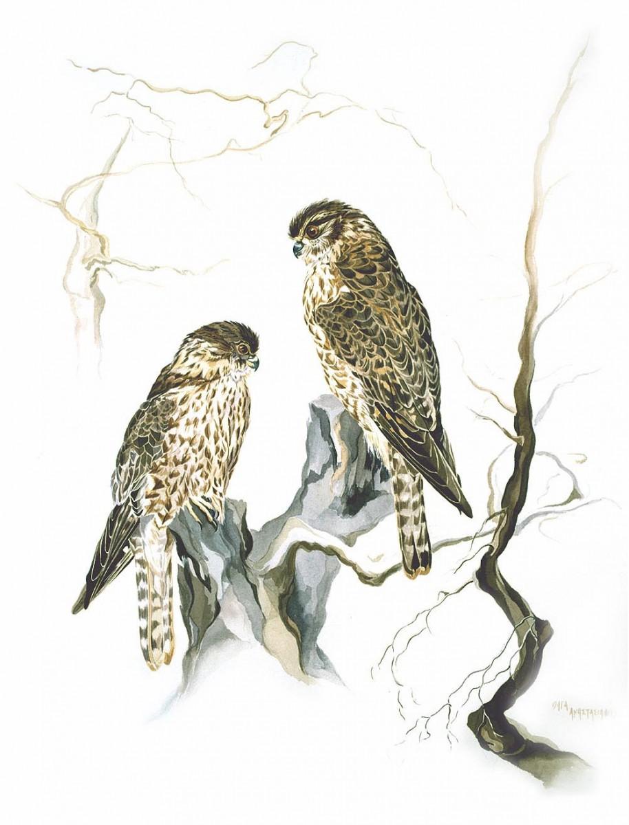 Πρόκειται για μια έκθεση στην οποία παρουσιάζονται έργα ποικίλης θεματολογίας, θέματα εμπνευσμένα από την αρχαία τέχνη και απεικονίσεις πτηνών.