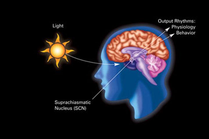 Εικ. 7. Το ηλιακό φως είναι βασικός παράγοντας που καθορίζει το βιολογικό μας ρολόι και τα επίπεδα ύπνου/εγρήγορσης.