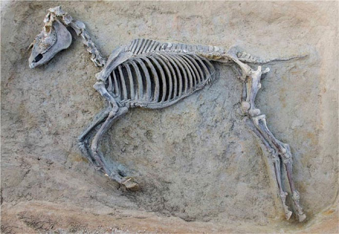 Tαφή ιπποειδούς στη νεκρόπολη του Φαλήρου (φωτ. ΥΠΠΟΑ).
