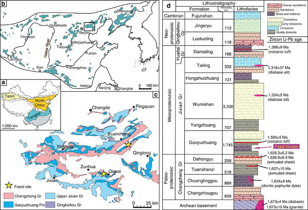 DNA που χρονολογείται από απολιθώματα