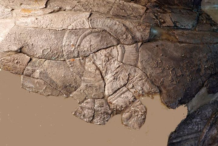 Λεπτομέρεια από τον Κρατήρα της Μάχης. Εθνικό Αρχαιολογικό Μουσείο, Αθήνα.