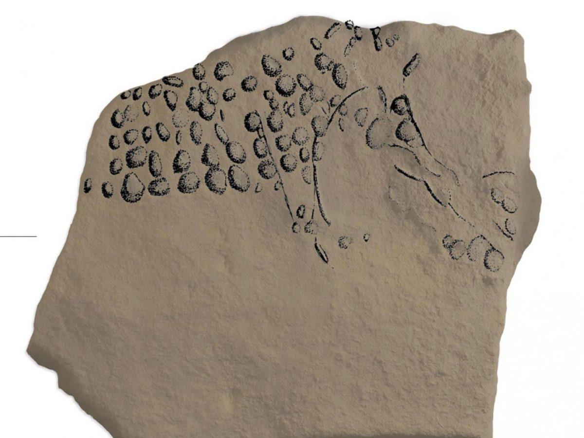 Πουαντιγιστική βραχογραφία 38.000 ετών. Φωτ.: R. Bourrillon.
