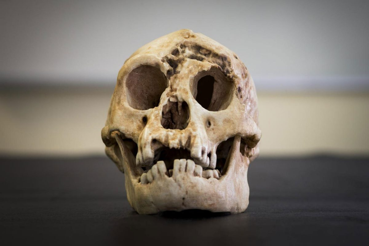 To κρανίο του Homo floresiensis. Πηγή: Stuart Hay – ANU.